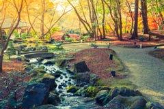 Jesień las z rzeką (Filtrujący wizerunek przetwarzający rocznik) zdjęcie stock