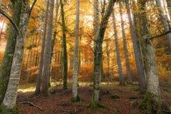 Jesień las z słońcem i cieniami obraz stock