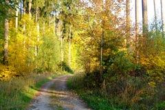 jesień las zrobił ścieżki fotografii Poland obraz royalty free