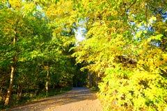 jesień las zrobił ścieżki fotografii Poland obrazy royalty free