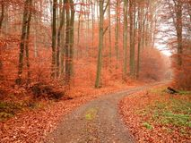 Jesień Lasowy ślad zdjęcie royalty free