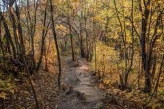 Jesień Lasowy ślad Zdjęcia Royalty Free