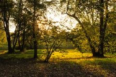 jesień lasowy Romania zmierzch Obraz Stock