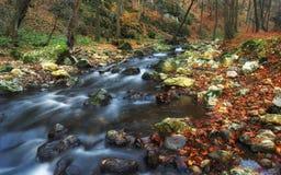 Jesień lasowy strumień Zdjęcia Stock