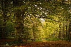 Jesień lasu ścieżka Obrazy Royalty Free