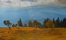 jesień lasu światła łąki spektakularny Obrazy Stock
