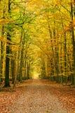 jesień lasu droga przemian Fotografia Stock