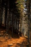 jesień lasu droga przemian Fotografia Royalty Free