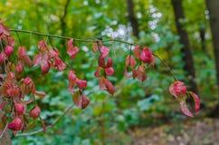 Jesień lasu krajobraz z złotymi liśćmi i piękną naturą Obrazy Royalty Free