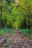 Jesień lasu krajobraz z złotymi liśćmi i piękną naturą Fotografia Royalty Free