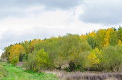 Jesień lasu krajobraz z złotymi liśćmi i piękną naturą Zdjęcia Royalty Free