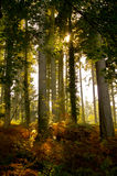 jesień lasu liść Fotografia Stock