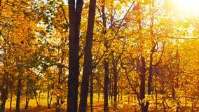 jesień lasu odprowadzenie zbiory wideo