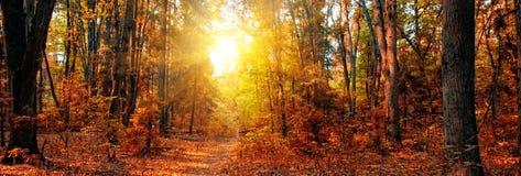 jesień lasu panorama Obraz Royalty Free