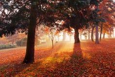 Jesień lasu parka krajobraz fotografia stock