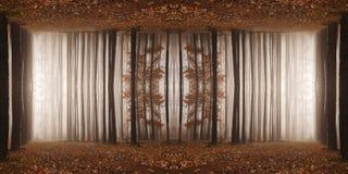 Jesień lasu pokój Mgłowy ranek w sosnowym lesie Fotografia Stock