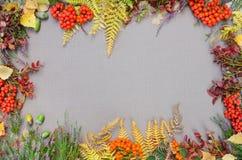 Jesień lasu rama Zdjęcie Stock