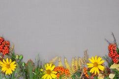 Jesień lasu rama Zdjęcie Royalty Free