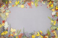 Jesień lasu rama Obrazy Royalty Free