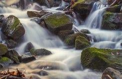 Jesień lasu rzeka Obraz Stock