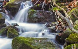 Jesień lasu rzeka Fotografia Stock