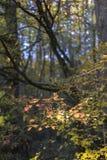 Jesień lasu sceneria zdjęcia royalty free