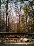 Jesień lasu widok Obraz Stock