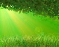jesień liść światło słoneczne Zdjęcie Stock