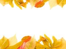 jesień liść Fotografia Royalty Free