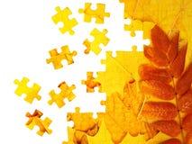 jesień liść Obrazy Royalty Free