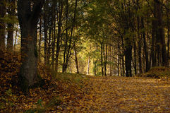 jesień liść Zdjęcia Royalty Free