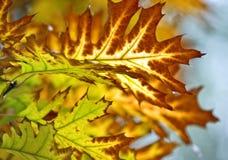 jesień liść Obrazy Stock