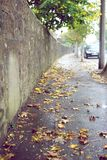 Jesień liść Zdjęcie Royalty Free