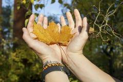 Jesień liść Fotografia Stock