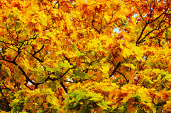 jesień liść Obraz Royalty Free