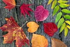 Jesień liść abstrakcjonistyczny tło. Fotografia Stock