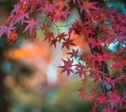Jesień liść, bardzo płytka ostrość Obraz Stock