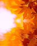 Jesień liść, bardzo płytka ostrość Zdjęcia Royalty Free