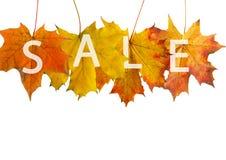 jesień liść czerwień Obraz Stock