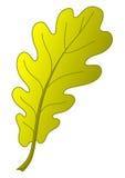 jesień liść dąb Obraz Royalty Free