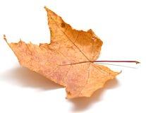 jesień liść klon Zdjęcia Royalty Free