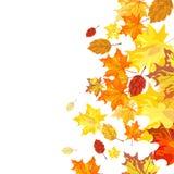 Jesień liść klonowy Zdjęcie Stock