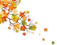 Jesień liść klonowy Fotografia Stock