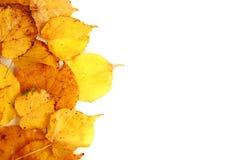 Jesień liść klonowy obraz stock