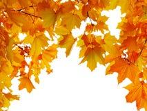 Jesień liść klonowy kształtujący łuk, odosobniony na białym tle fotografia royalty free