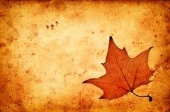 Jesień liść klonowy na grunge starym papierze Obrazy Royalty Free