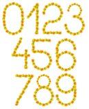 jesień liść liczby Zdjęcie Stock