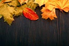 Jesień liść na drewnianym tle Obraz Royalty Free