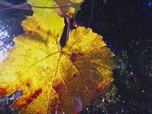 Jesień liść na gałąź drzewo fotografia royalty free