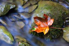 Jesień liść na kamiennym pobliskim strumyku Obrazy Stock
